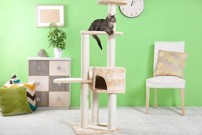 Cat sitting on top of a cat tree