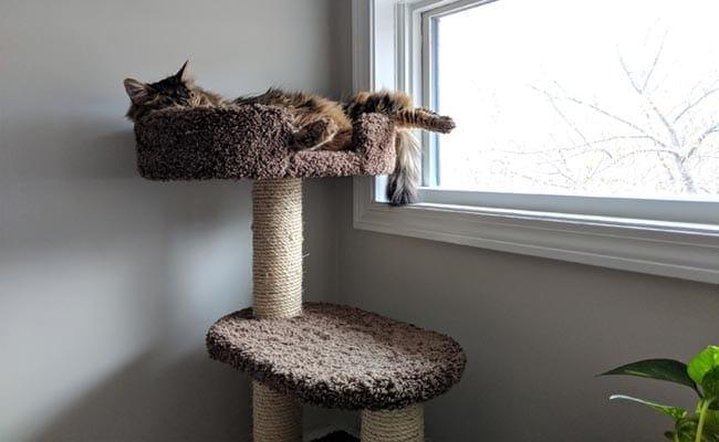 Cat tree