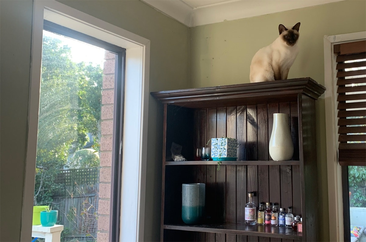 Cats like high places