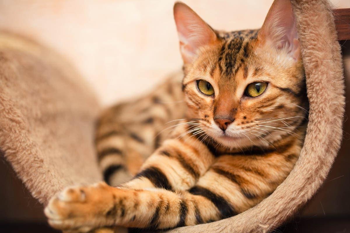 Environmental modification for cats