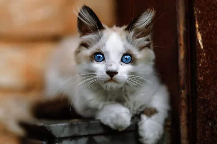 Homeless cat
