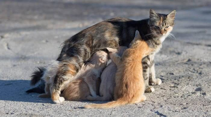 Homeless mother cat and her kittens