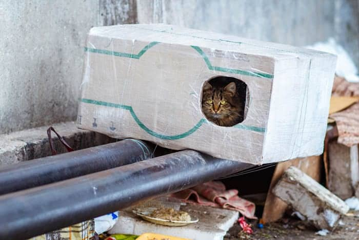 Homeless cat outdoor shelter