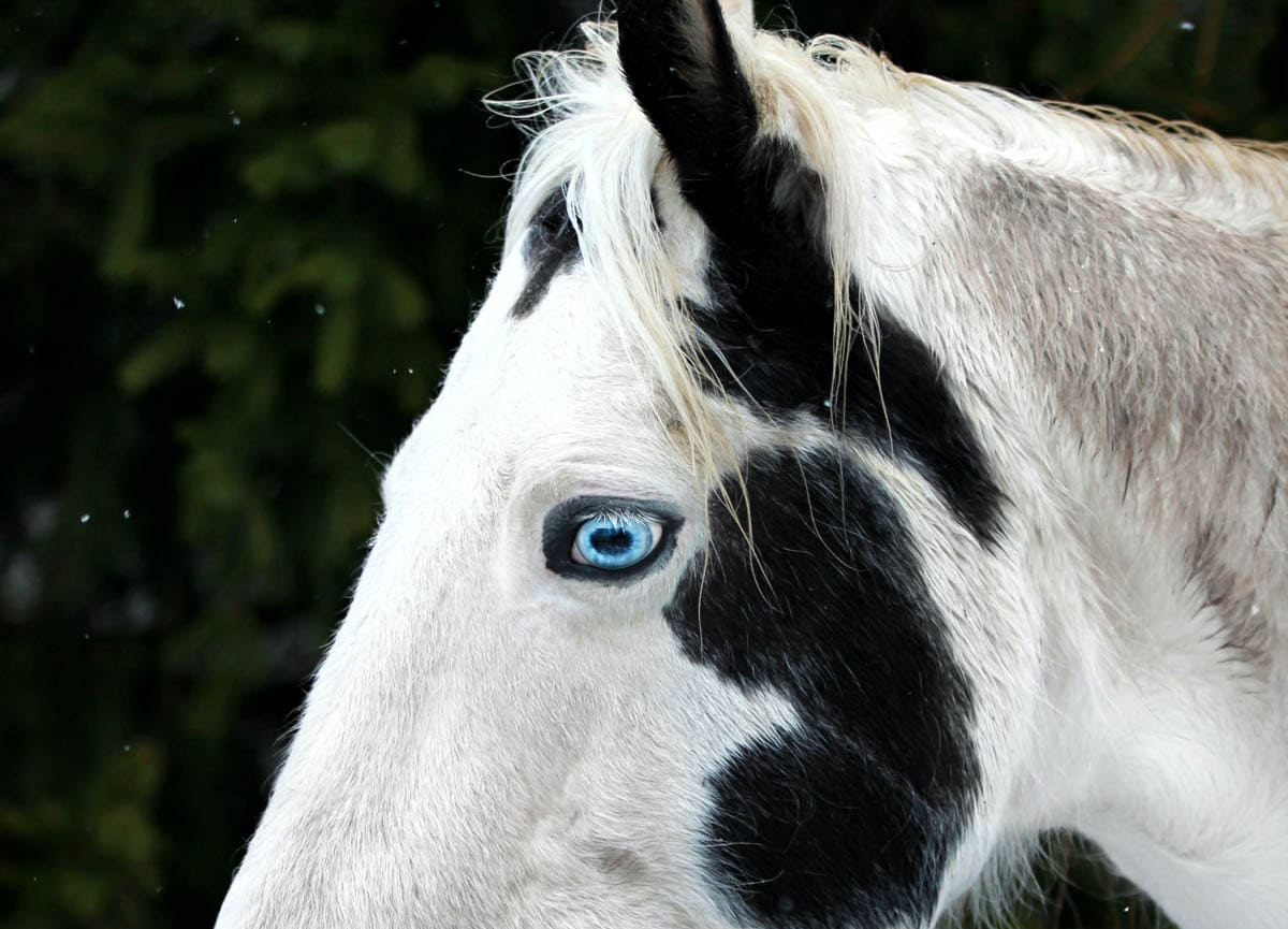 Horses have horizontal pupils