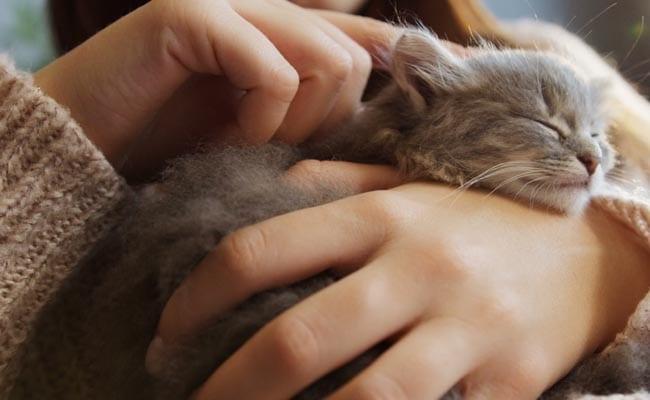 Socialising a kitten