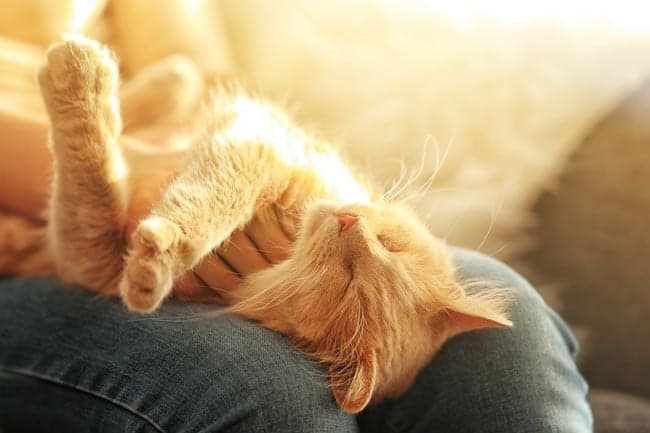 Happy cat showing a relaxed posture