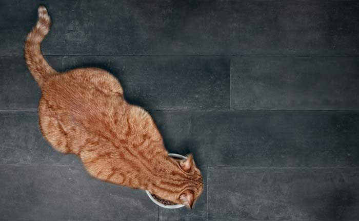 Stone dissolving diets for cats