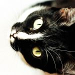 Why Do Cats Have Elongated (Elliptical) Pupils?