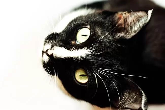 Why do cats have slit pupils?