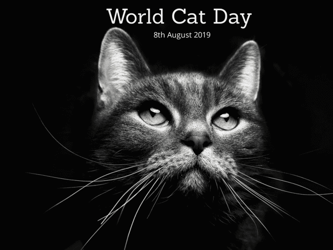 International Cat Day - 8th August 2019