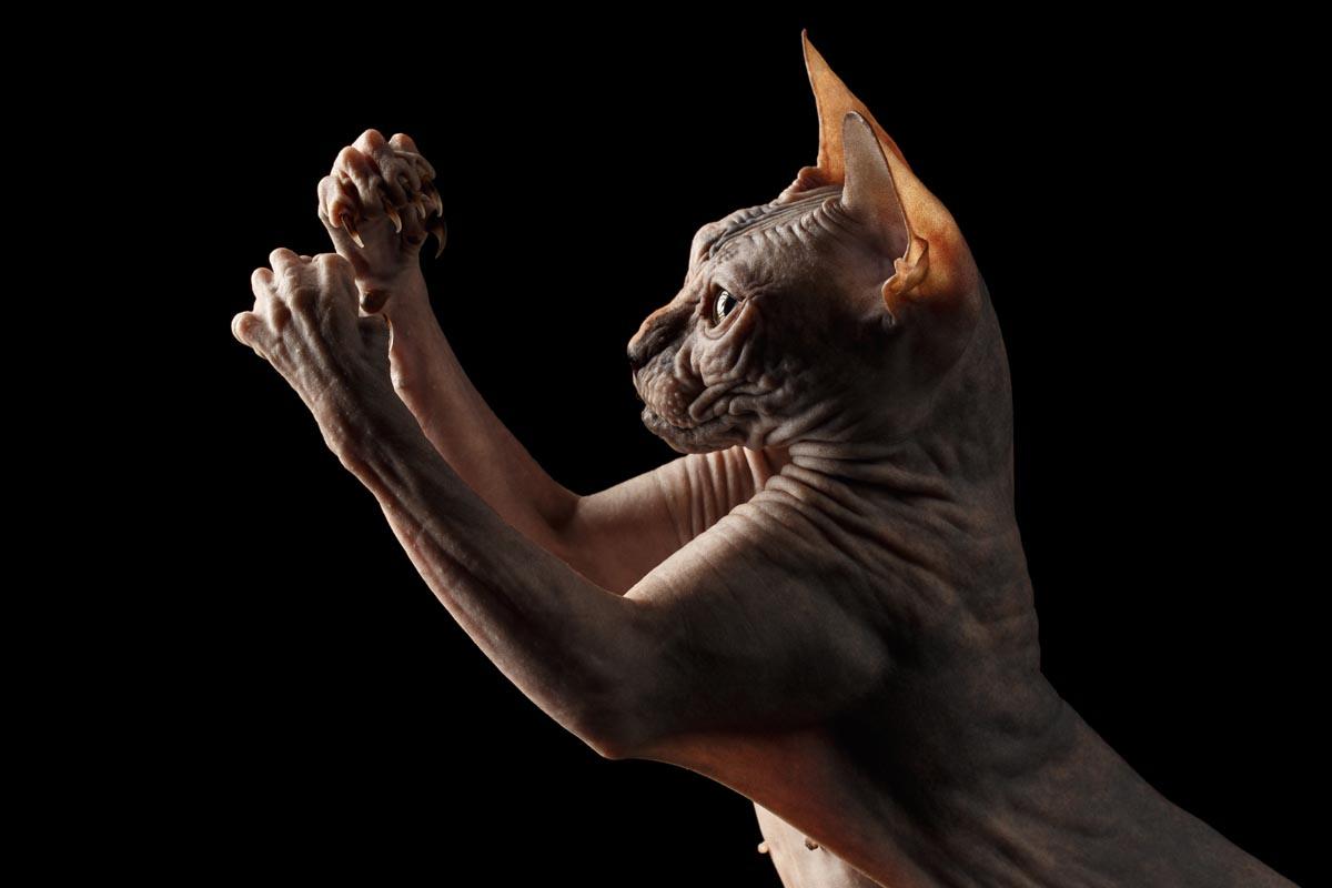 Cat arms