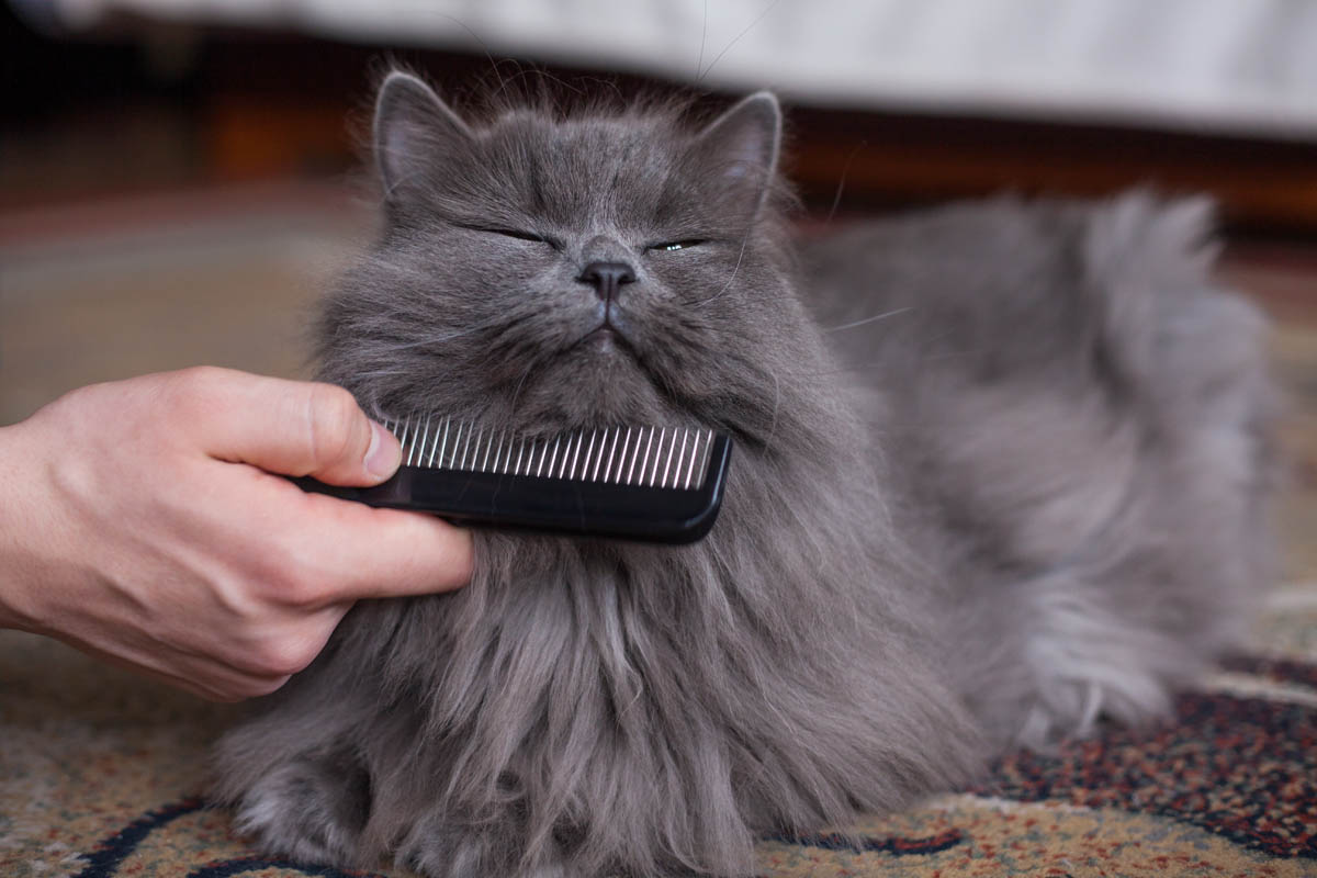 Cat grooming equipment