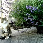 How Does Catnip Work & Why Do Cats Love It?