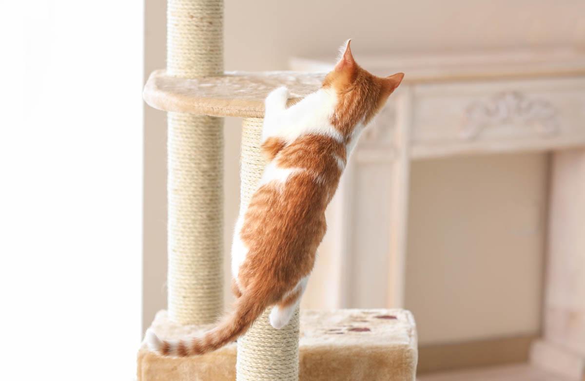 Cat playing on cat tree