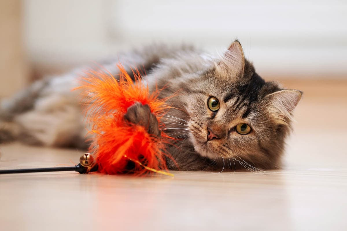 Cat playing with a feather toy