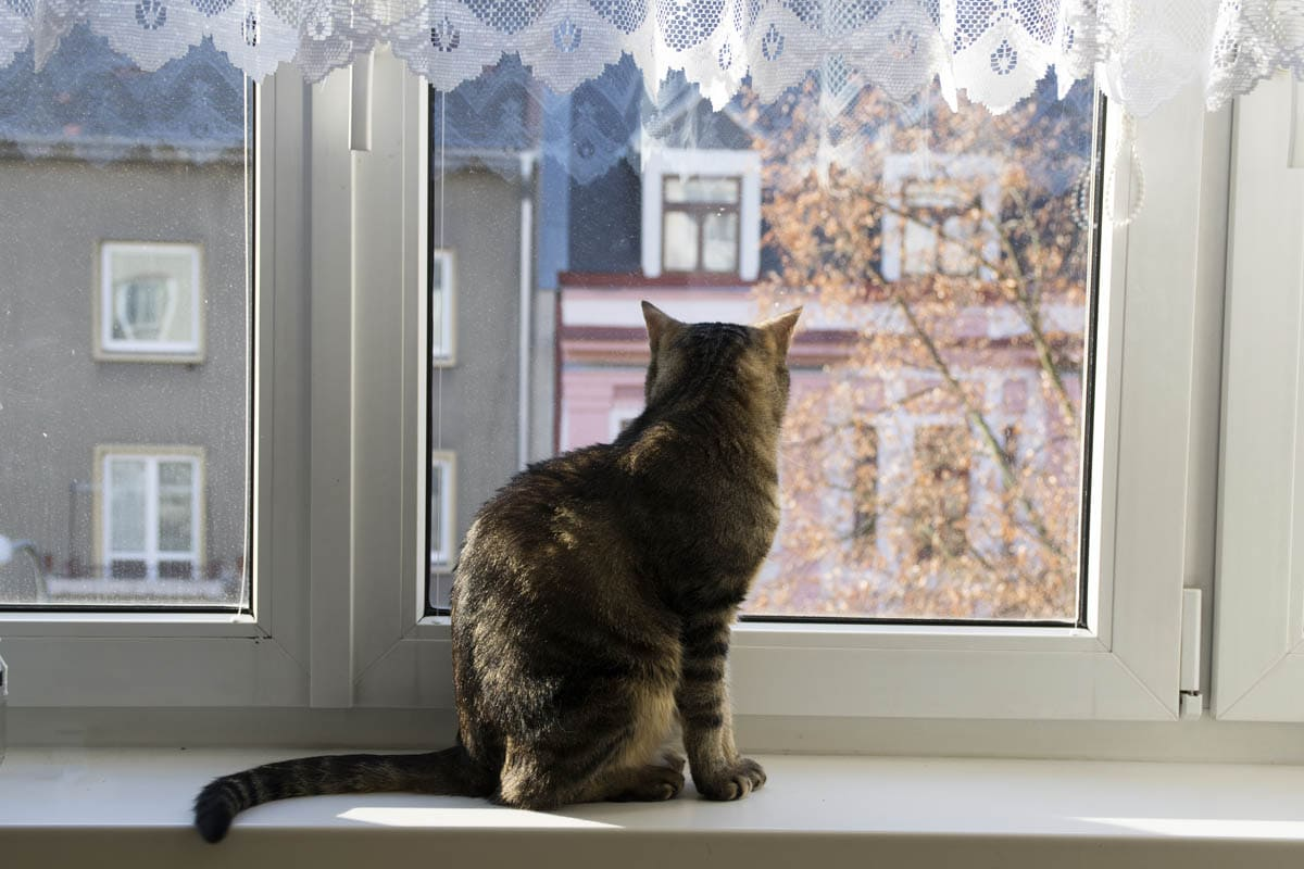 Cat enjoying a view from a window