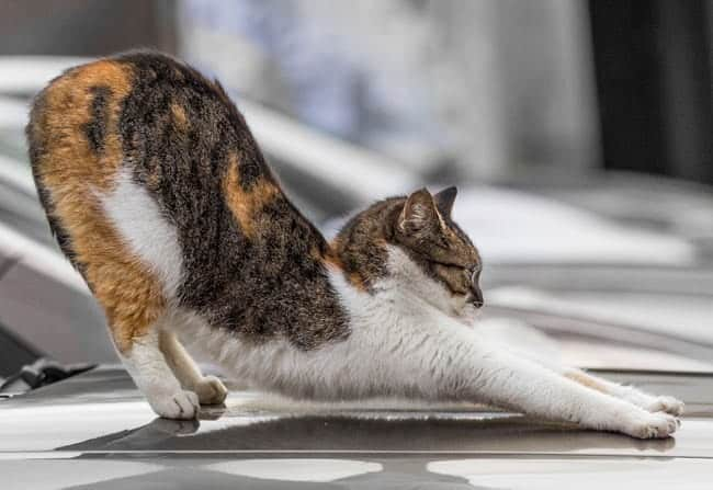 Do Cats Have Knees and Elbows? 1