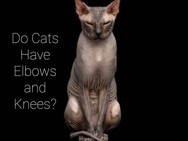 Do cats have elbows and knees?