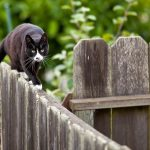 Effective Ways To Keep Cats Away From Your Garden