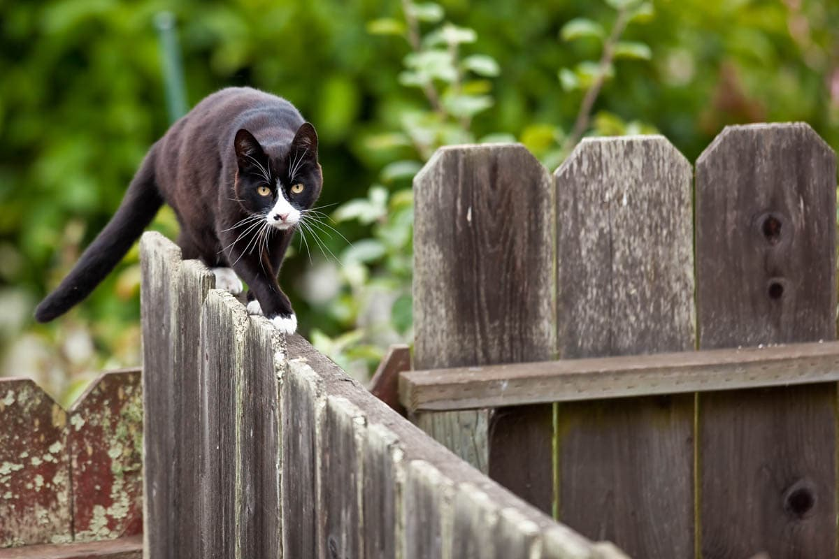 Keeping cats out of gardens