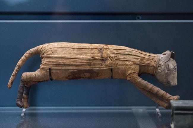 Egyptian mummified cat