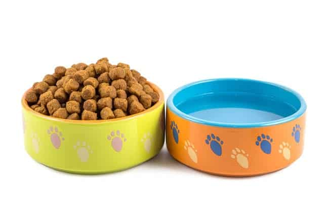 Cat food and water bowls