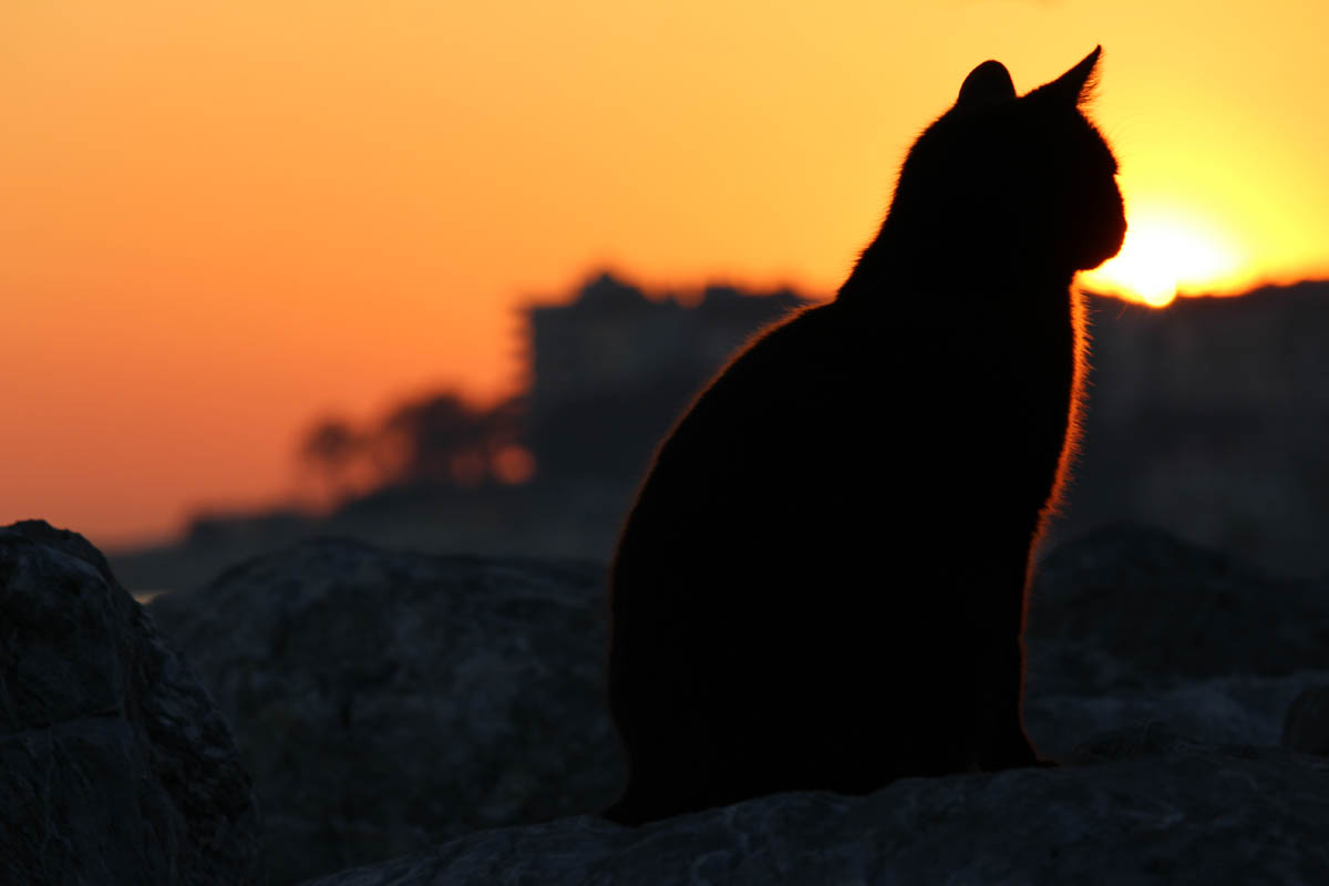 When is the right time to euthanise a cat?
