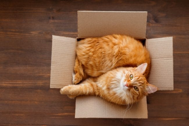 Ginger cat in a box