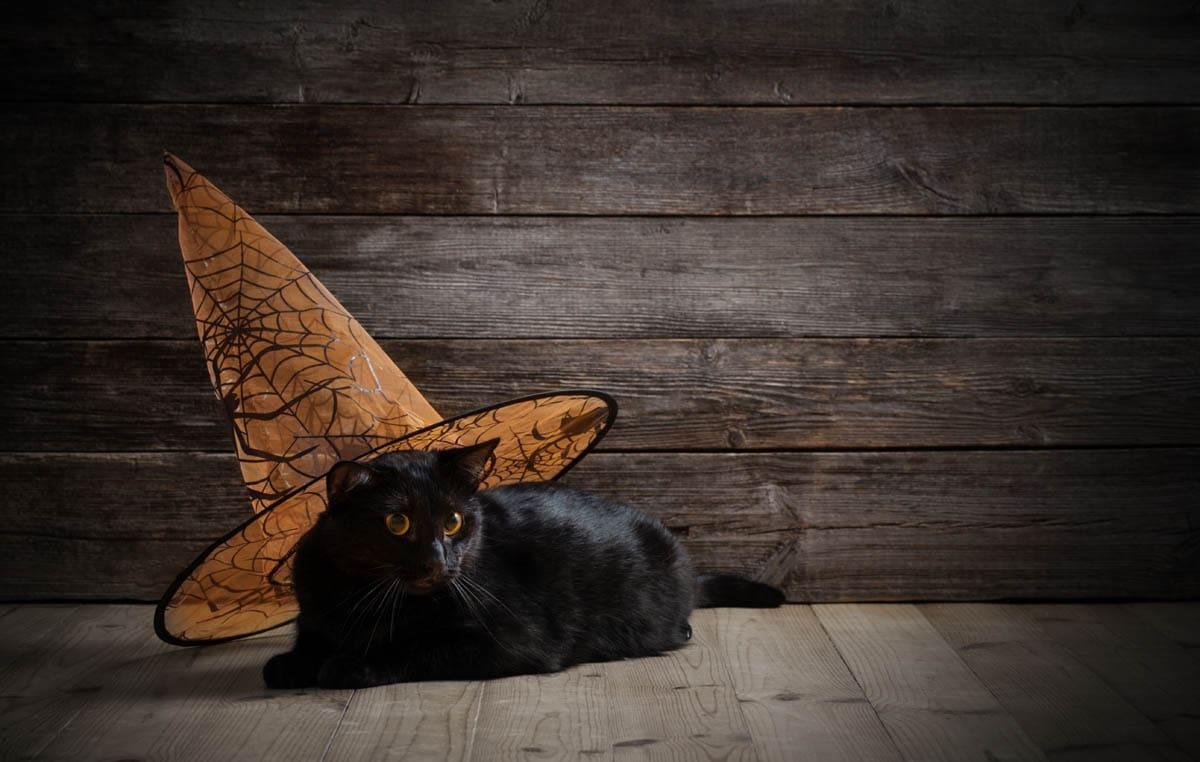Halloween dangers for cats