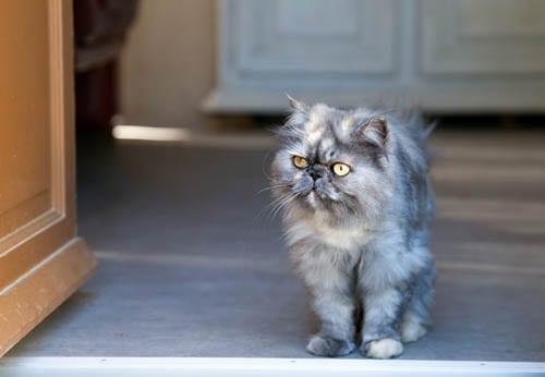 Cat standing by an open door