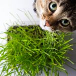 Types Of Cat Grass & How To Grow It