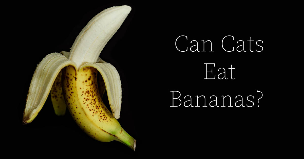 Can cats eat bananas?