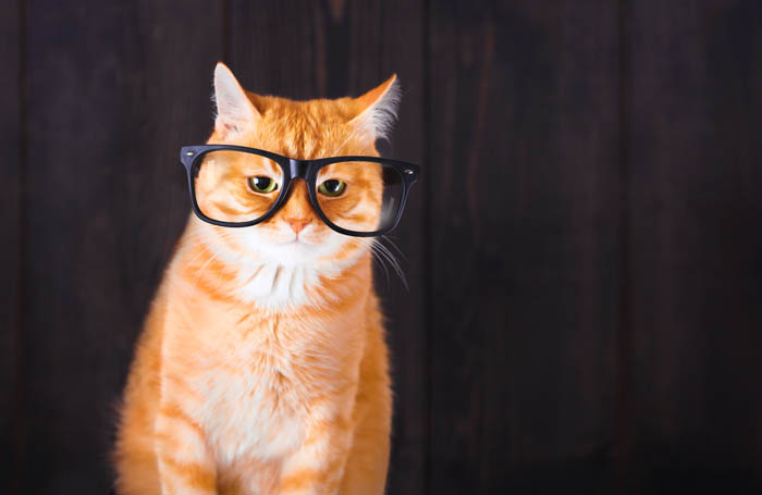 Does a cat's eyesight decline with age?