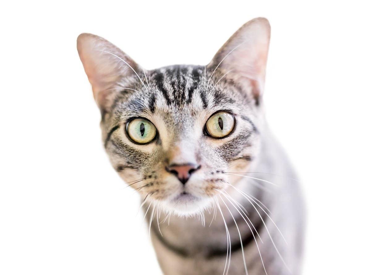 Tabby M on cat forehead
