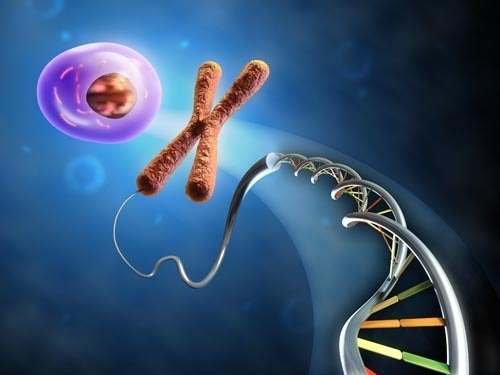 Chromosome and DNA