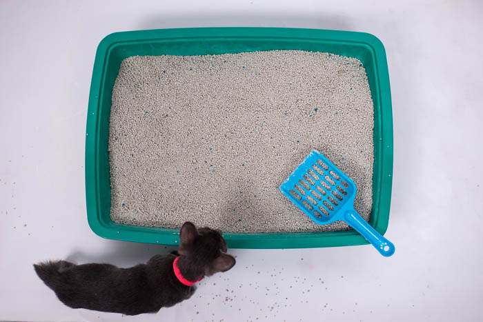 Disposing of cat litter
