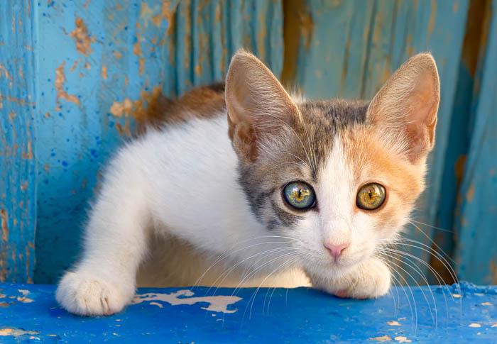 When Do A Kitten S Eyes Change Colour Cat World
