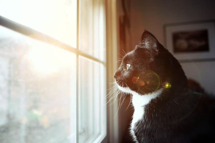 Do cats get lonely if they are left on their own for long?