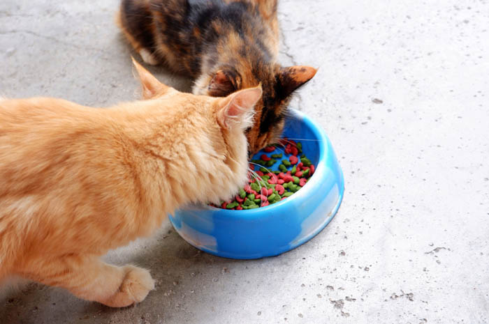 Do plastic food bowls cause feline acne?