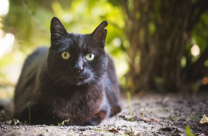 Ear tipping and ear notching in cats