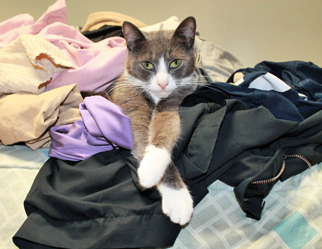 Why do cats sit on clean laundry?