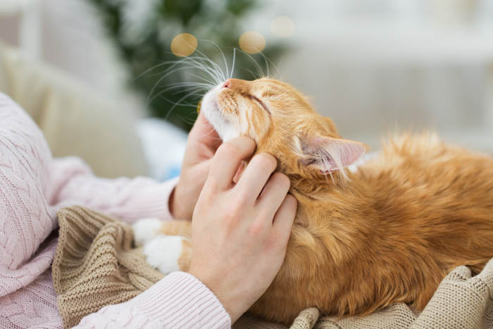 Complete guide to caring for cats