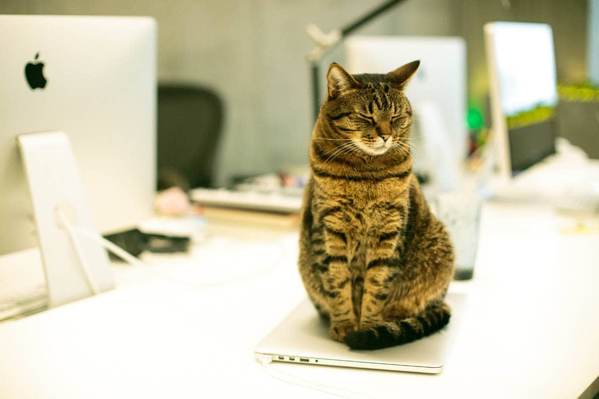 How do working people care for their cat?