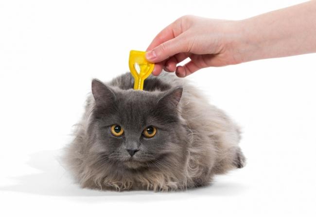 Topical flea treatment