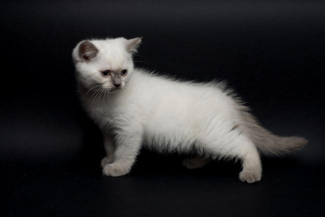Purebred vs mixed breed cat