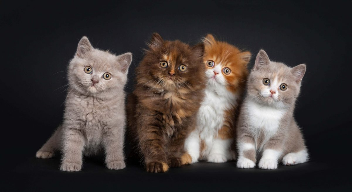 Why Do Cats Have Different Coloured Kittens?