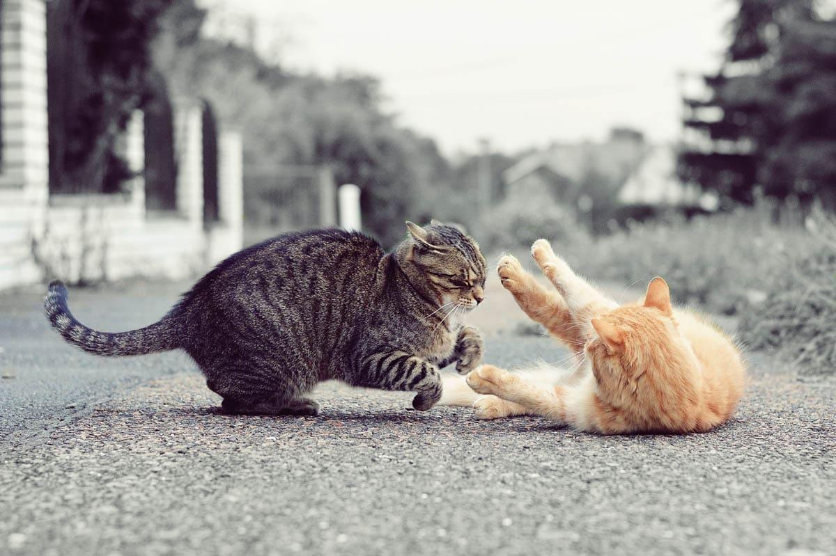 Submissive cat