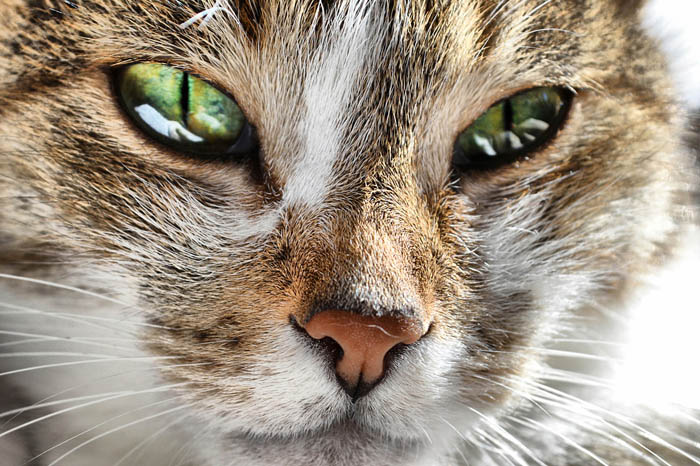 Amitriptyline for cats