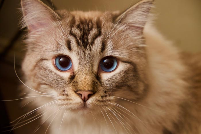Six reasons to neuter a male cat