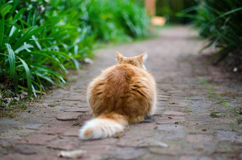 What should you do if a cat is hanging around your home?